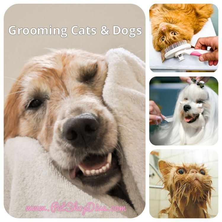 pet grooming for cats and dogs can be tricky but so