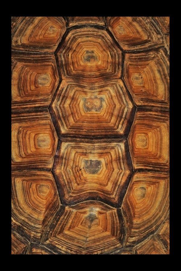 schildkr tenpanzer schokoladenfarben pinterest schildkr tenpanzer fraktale und textur. Black Bedroom Furniture Sets. Home Design Ideas
