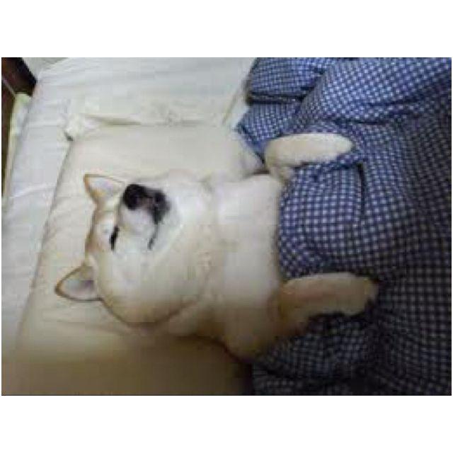 Sleeping dog 3