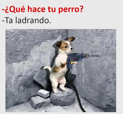 Mejores 49 Imagenes Chistosas La Seleccion Mas Graciosa De La Web Mejores Imagenes Funny Cat Memes Funny Animal Memes Puppies Funny