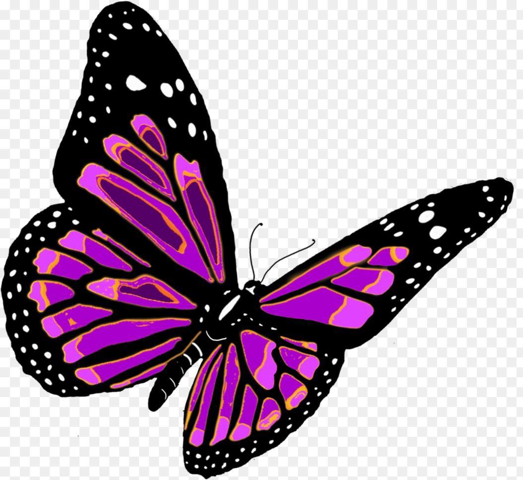 Butterfly Clipart Png Butterfly Clipart Png 101 Clip Art 1053 967 Png Download Free Transparent Background Butte Borboleta Png Borboleta Borboleta Voando