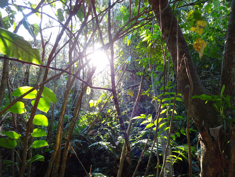 Horto Forestal