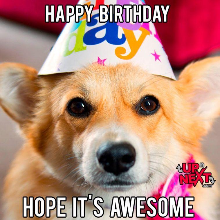 30 funny happy birthday memes cake candles cat dog