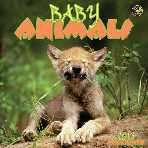 Baby Animals Mini Wall Calendar: Nobody puts baby in a corner! These adorable baby animals are front and center each month.  $5.99  http://www.calendars.com/Baby-Animals/Baby-Animals-2013-Mini-Wall-Calendar/prod201300004091/?categoryId=cat00172=cat00172#