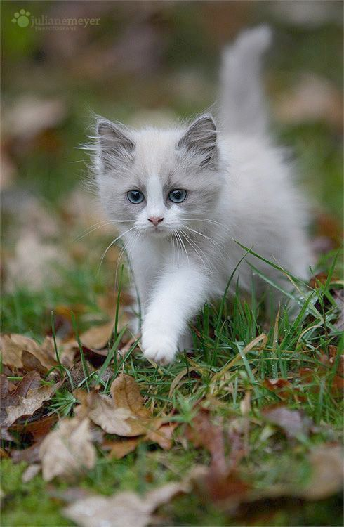 This Is My Exercise With Images Kittens Cutest Cute Cats
