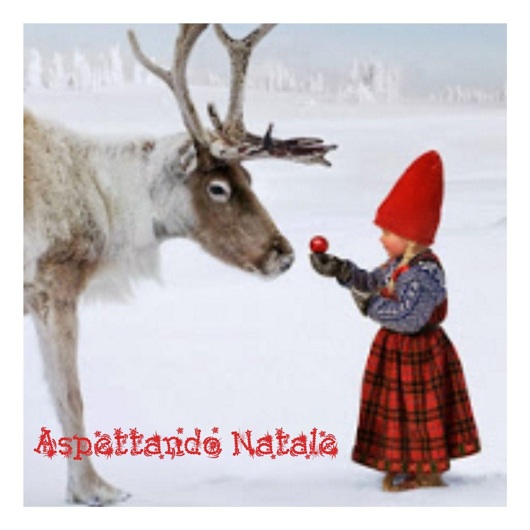 Non ricordo la fonte. Ma la foto é meravigliosa!!!Aspettando Natale ...