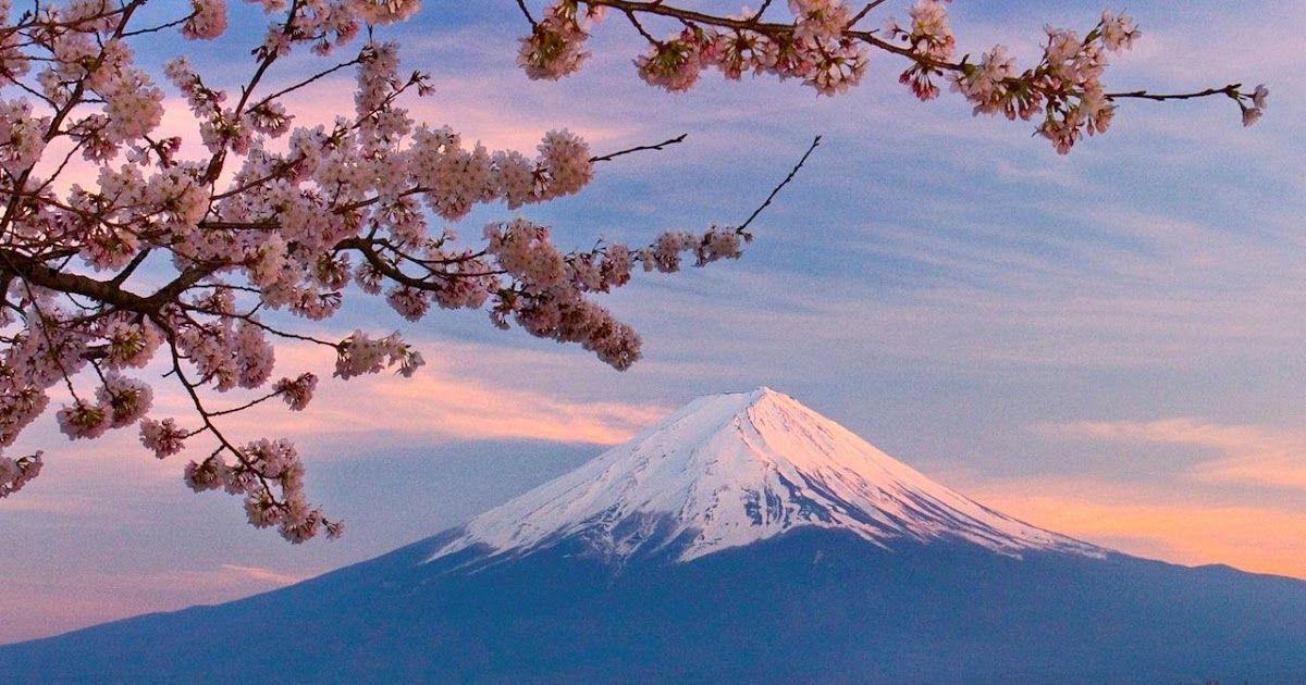 Paling Populer 30 Pemandangan Gunung Fuji Dengan Bunga Sakura 47 Gambar Bunga Sakura Dan Gunung Fuji Download Ilustrasi Bu Di 2020 Pemandangan Gambar Gunung Fuji