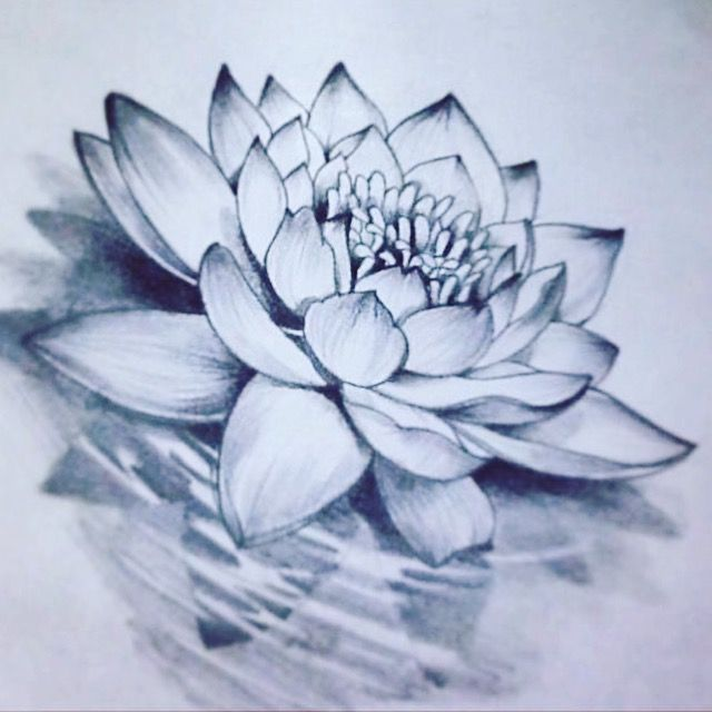 Lotus Flower Lotus Flower Drawing Water Lily Tattoos Flower Drawing