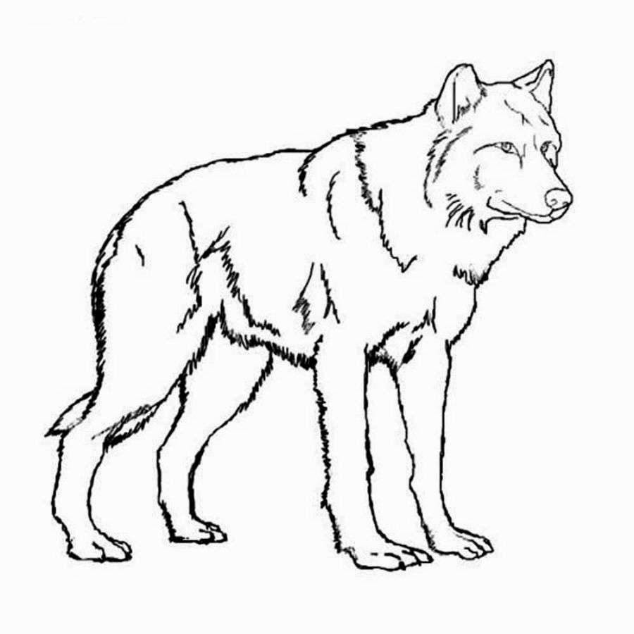 Coloring Pages Wolf Puppy Coloring Pages Wolf Colors Horse Coloring Pages
