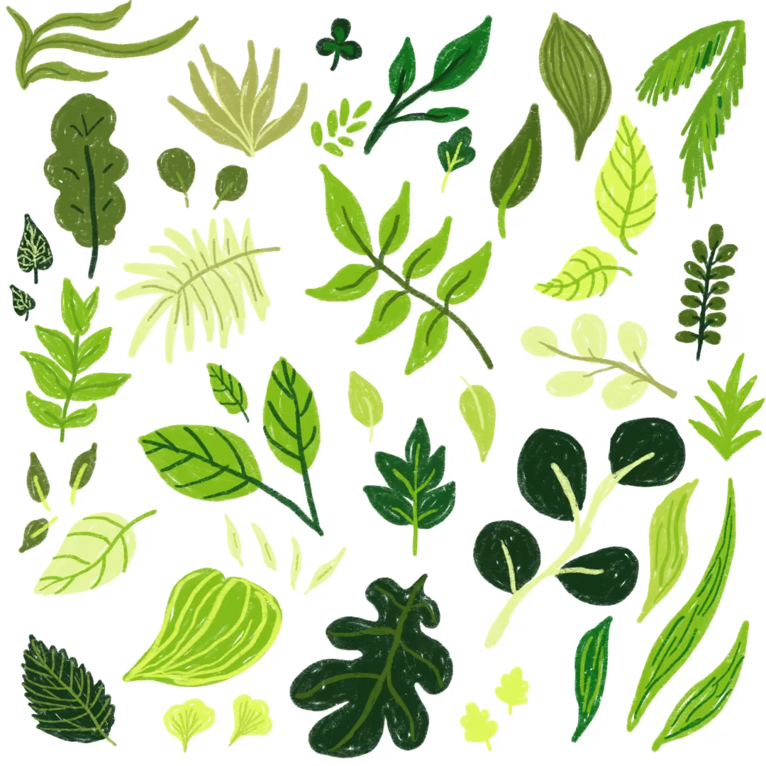 A Time Lapse Of Drawing Several Green Leaves Green Tea Leaf 2020 Illustration Dijital Ilustrasyon Drawing