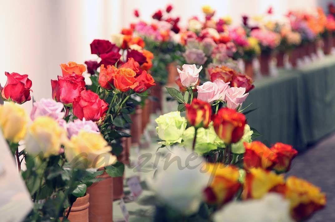 VI Feria de la Rosa. El 27 y 28 de mayo, Roses se llenará de flores, conciertos, danza, concursos, degustaciones… e invitará a comer a 1.000 mujeres que se llamen Rosa.