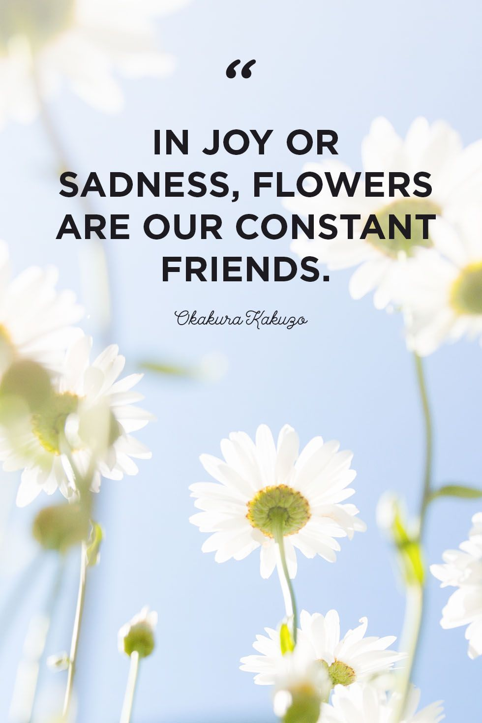 Flower Quotes To Inspire Growth In 2020 Flower Quotes Inspirational Flower Quotes Inspirational Quotes