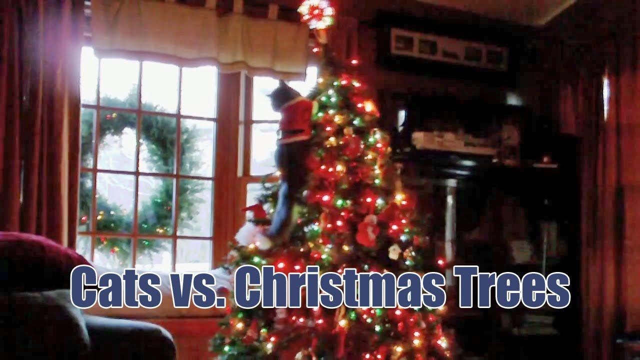 Cats Vs Christmas Trees.Cats Vs Christmas Tree Definitely Cats Love Hilarious