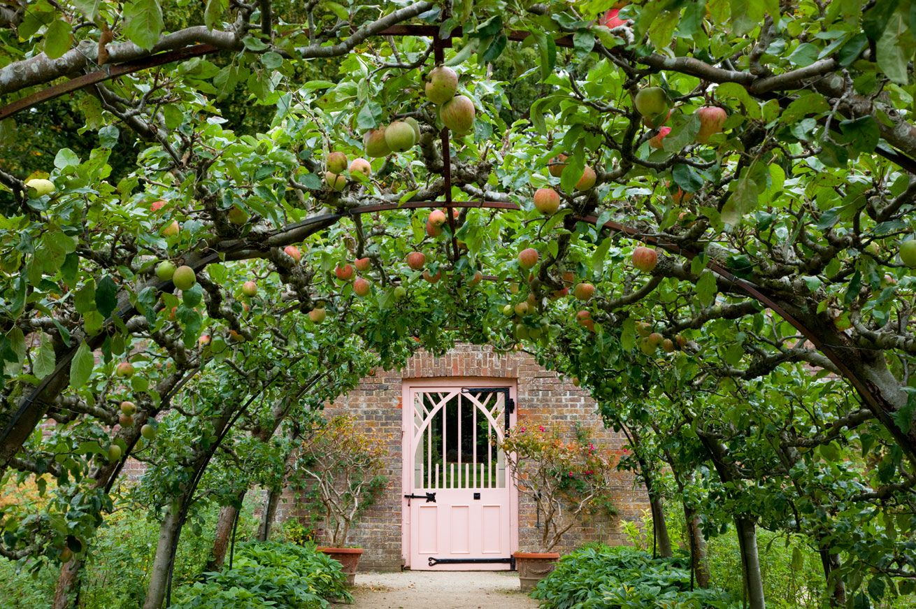 Pics #2 (Apple Arbor) & 7
