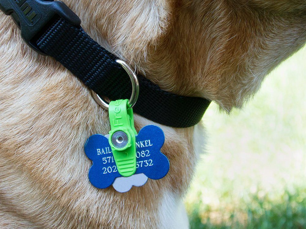 Freezetag Pet Tag Silencer Pet Tags Pets Pet Supplies