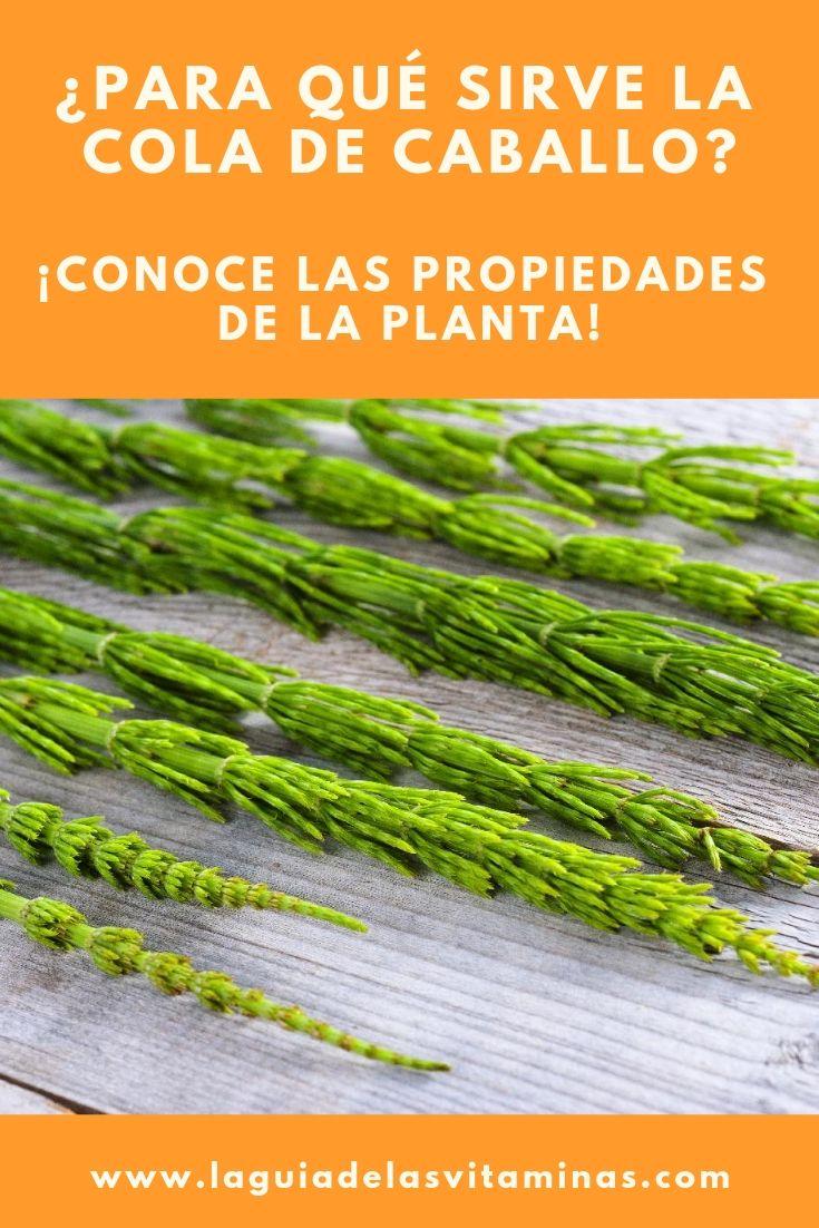 Propiedades De Las Plantas Para Qué Sirve La Cola De Caballo La Guía De Las Vitaminas Herbs Asparagus Diet