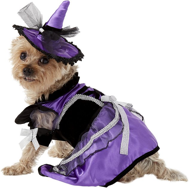 Picture Of Witch With Dog