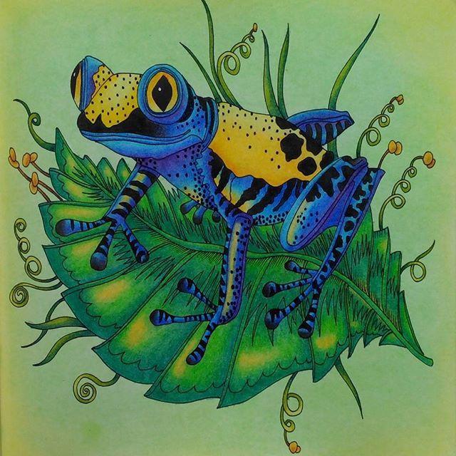 Exotic forest frog #exotischerurwald #exotickyprales ...