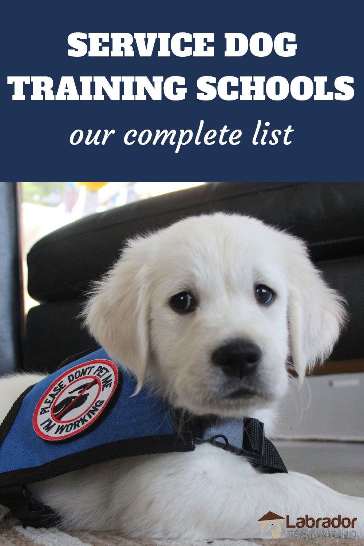 Service Dog Training Schools And How To Train A Service Dog In 2021 Service Dog Training Dog Training School Dog Training