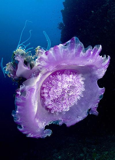 thelovelyseas:  Enormous beauty byLea's UW Photography