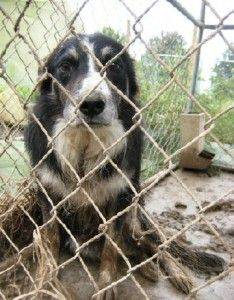 Shut Down Puppy Mills, DON'T ADOPT A PET ON LINE, FROM