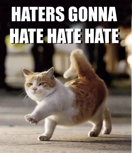 Image result for haters gonna hate cat