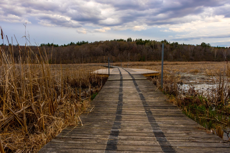 Walking Through The Marsh St Joe Minnesota