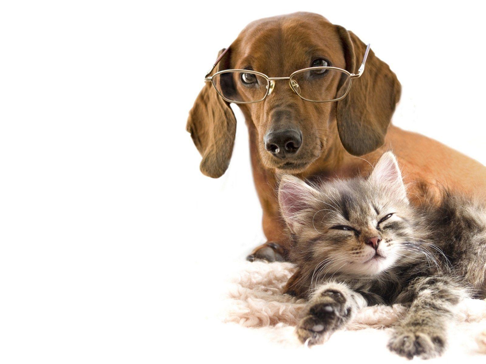 Gepind vanaf kepguru.hu Gatos, Cães e Animais