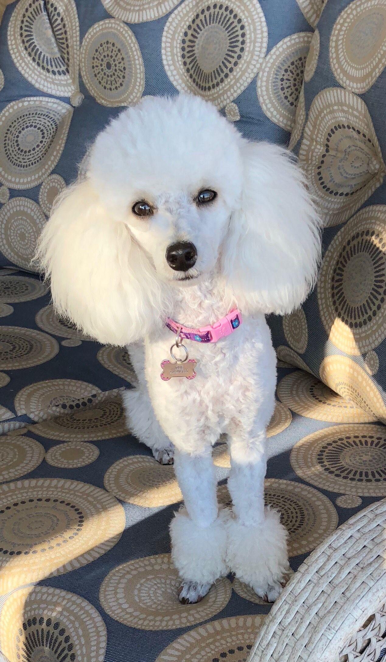 Jolie March 2018 Cute Dogs Pets Dog Cat