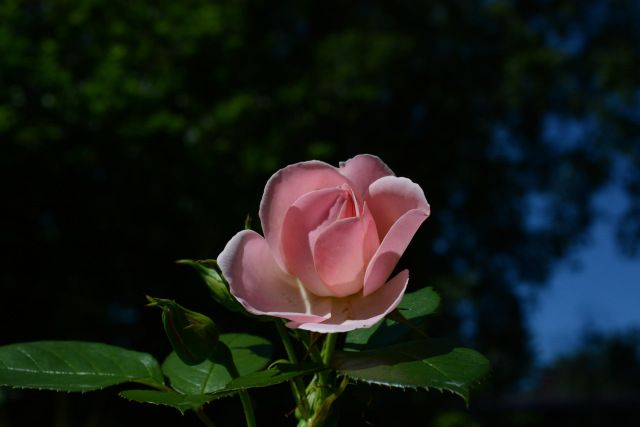 Astrid Lindgren | Vesan viherpiperryskuvat – puutarha kukkii