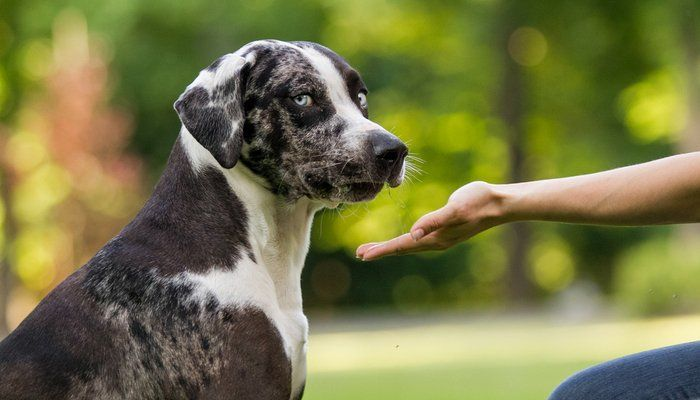7 Cutest Dog Breeds In The World Dogs Leopard Dog Dog