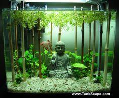 aquarium décor zen