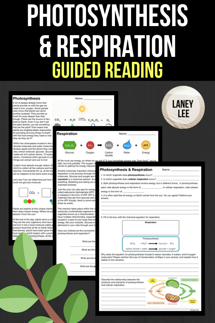 Photosynthesis Respiration Reading Questions Pdf Digital Versions Photosynthesis Middle School Science Class Middle School Science Resources [ 1102 x 735 Pixel ]