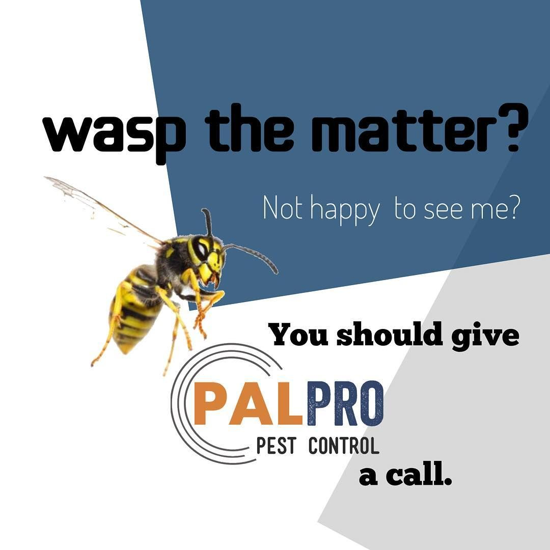 Pal Pro Pest Control At Your Service Palpropestcontrol Pestmanagement Pestcontrol Pal Pro Pes Pest Solutions Pest Control Services Pest Control
