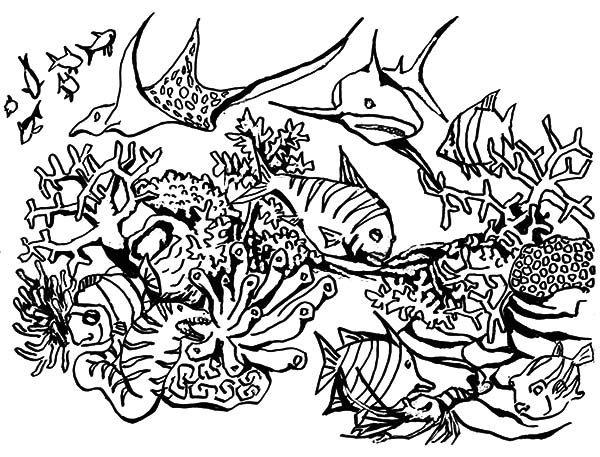 Coral Reef Fish Coral Reef Fish Predators Gathering Coloring Pages