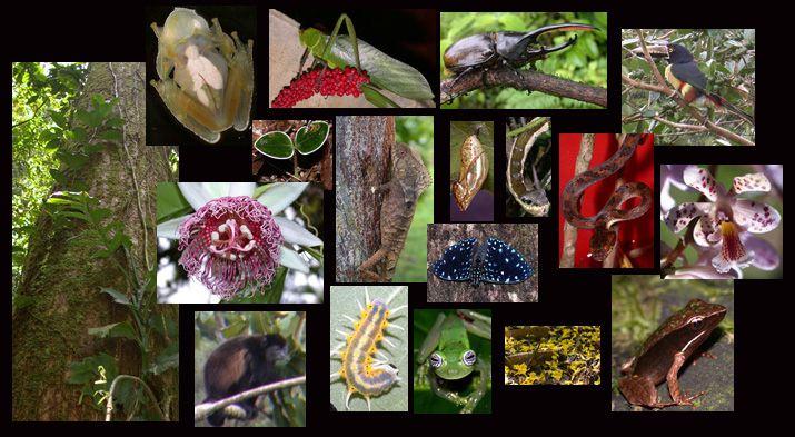 Reserva Ecológica Bijagual Costa Rica