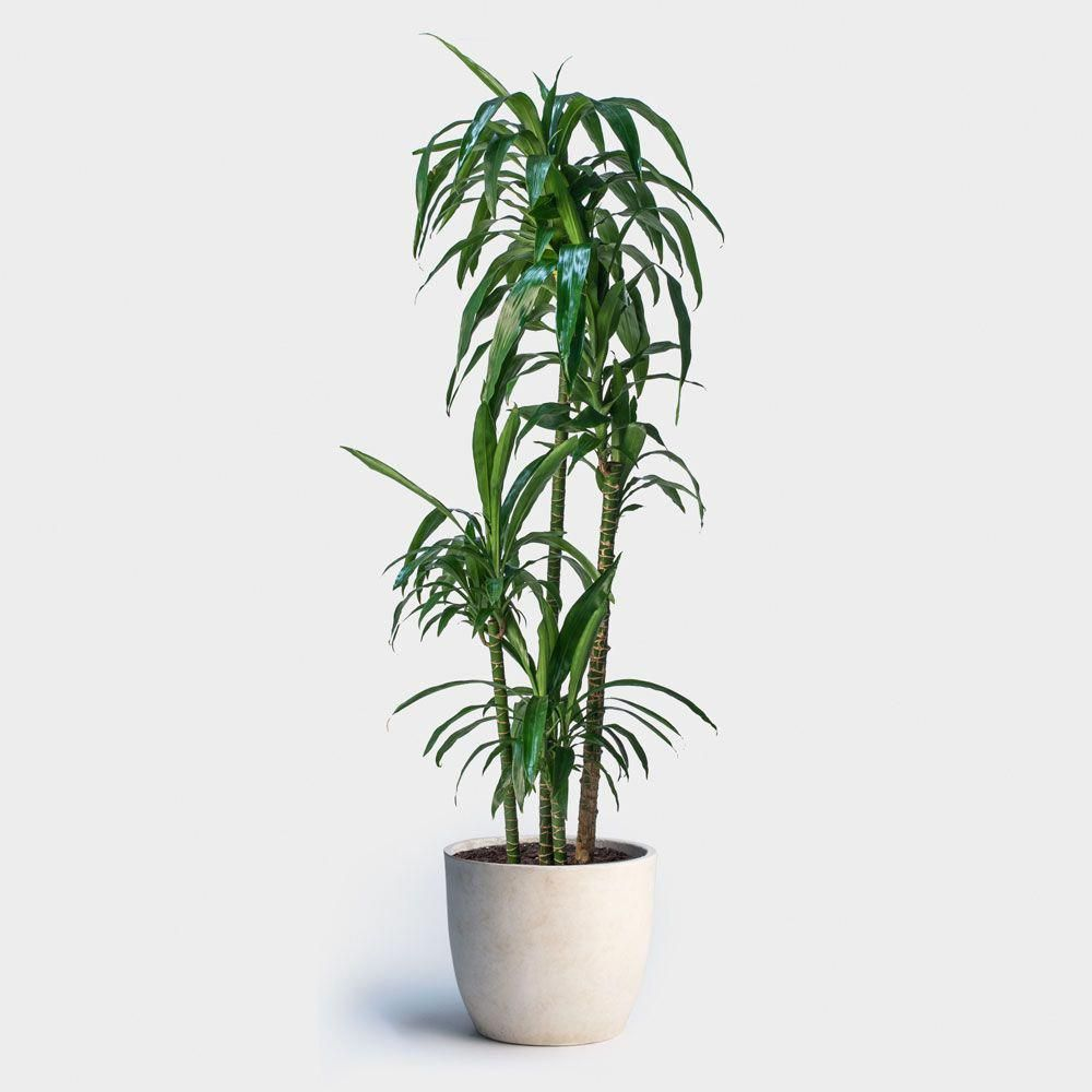 Free Nyc Plant Delivery To Manhattan Brooklyn And Queens Landscapedesigner
