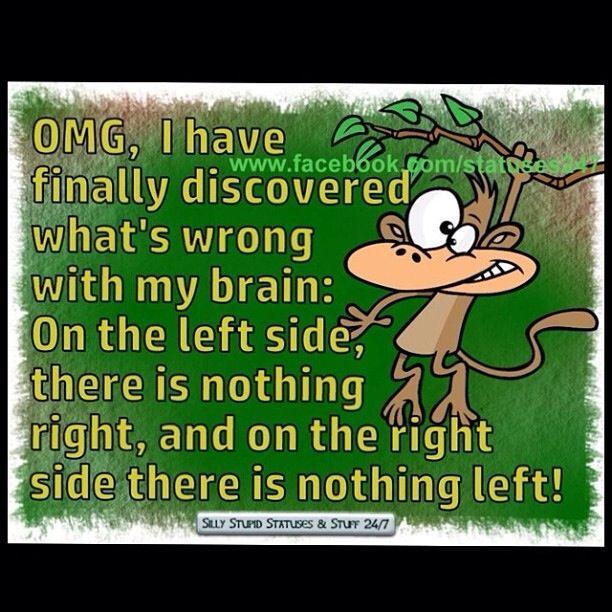 My Brain!