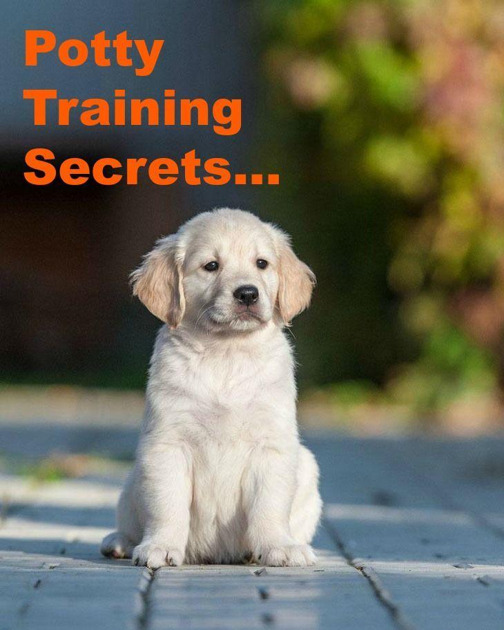 Doggy Dan S Kind Gentle Dog Training Method Retriever Puppy