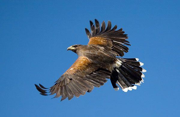 Animal Training Birds Of Prey Birds Of Prey Animals Pet Birds