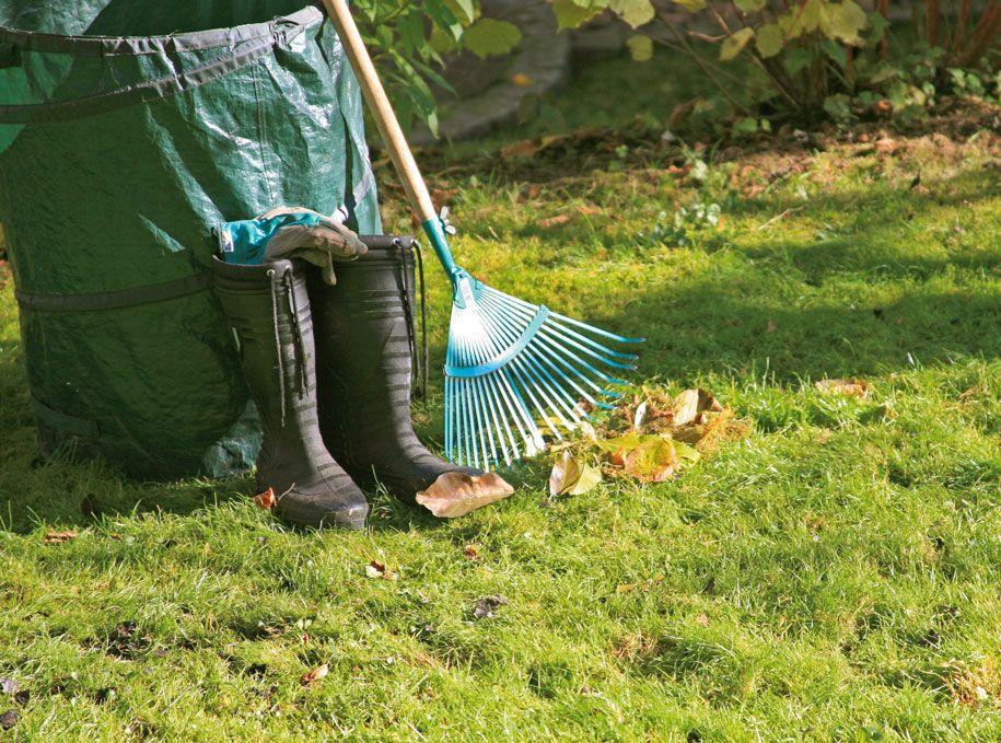 Rasenpflege Alles Zum Thema Mahen Dungen Saen Und Vertikutieren Rasen Vertikutieren Rasen Dungen