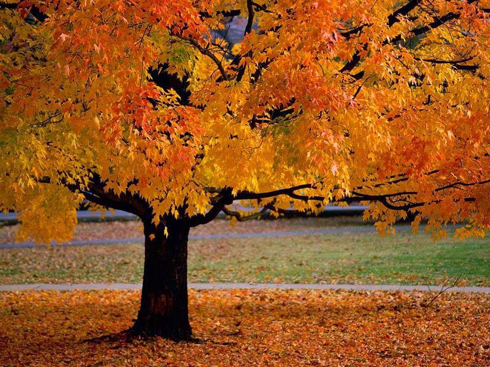 حقائق مذهلة: اجمل الاشجار التى يمكن ان تراها فى حياتك 10 صور