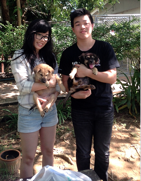 Adoption Update Sibling Soi Dog Puppies Swain And Soraka Have Been Adopted By A Very Nice Thai Family In Phuket Town Who Will Dogs And Puppies Dogs Dog Help