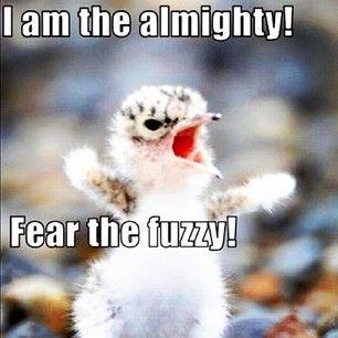 Fear The Fuzzy Cute Animals