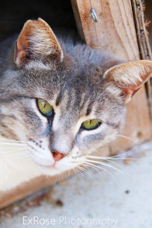 Cat sanctuary, Cat park