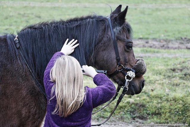 Umgang mit Pferden lernen, Reiturlaub für Kinder bei der Reiterpension Marlie in Schleswig Holstein