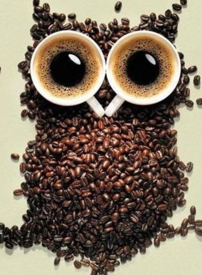Coffee Owl Coffee Coffee Art Coffee Love