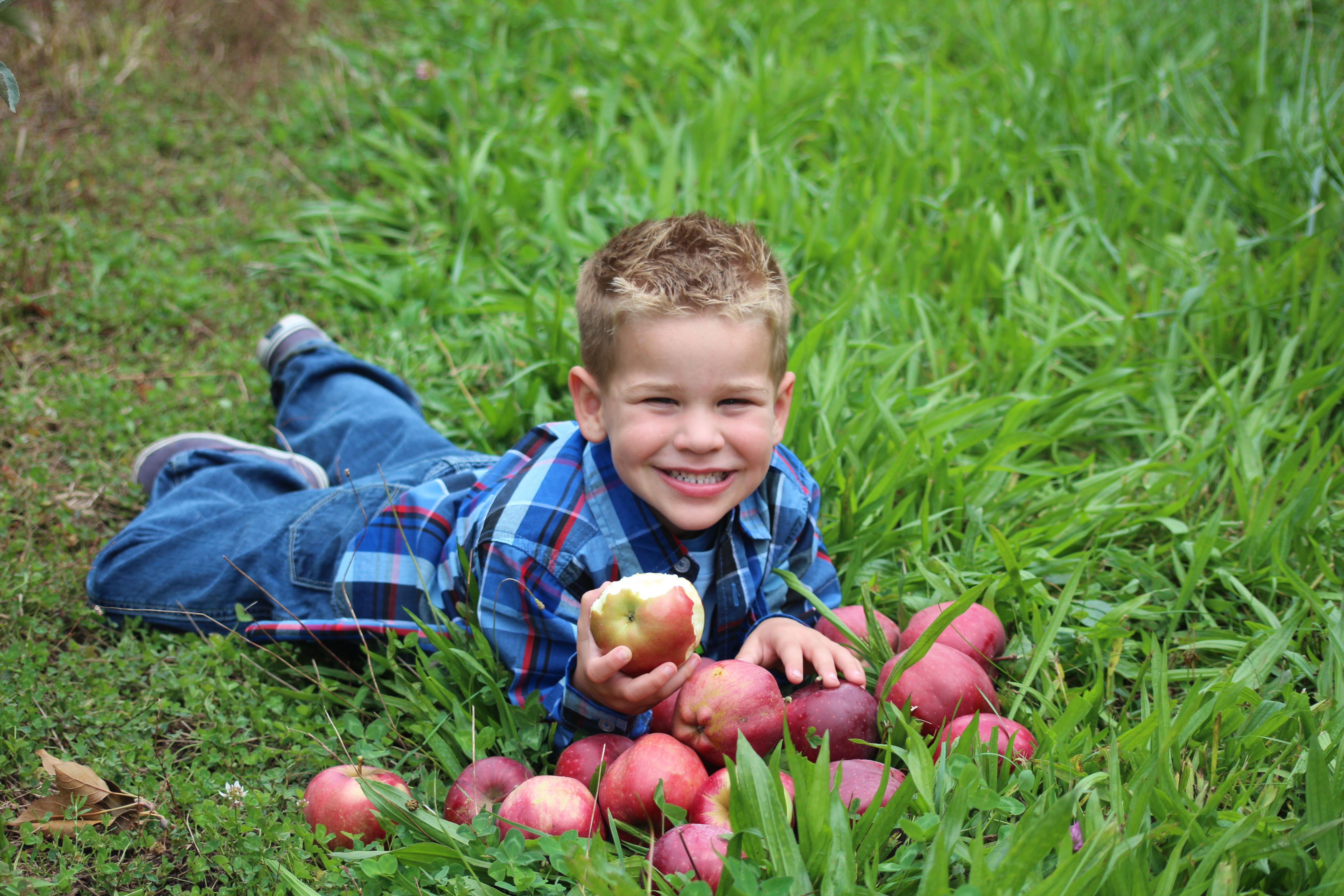 Collin Apple Pickin photo by Chrissy Marie Lum