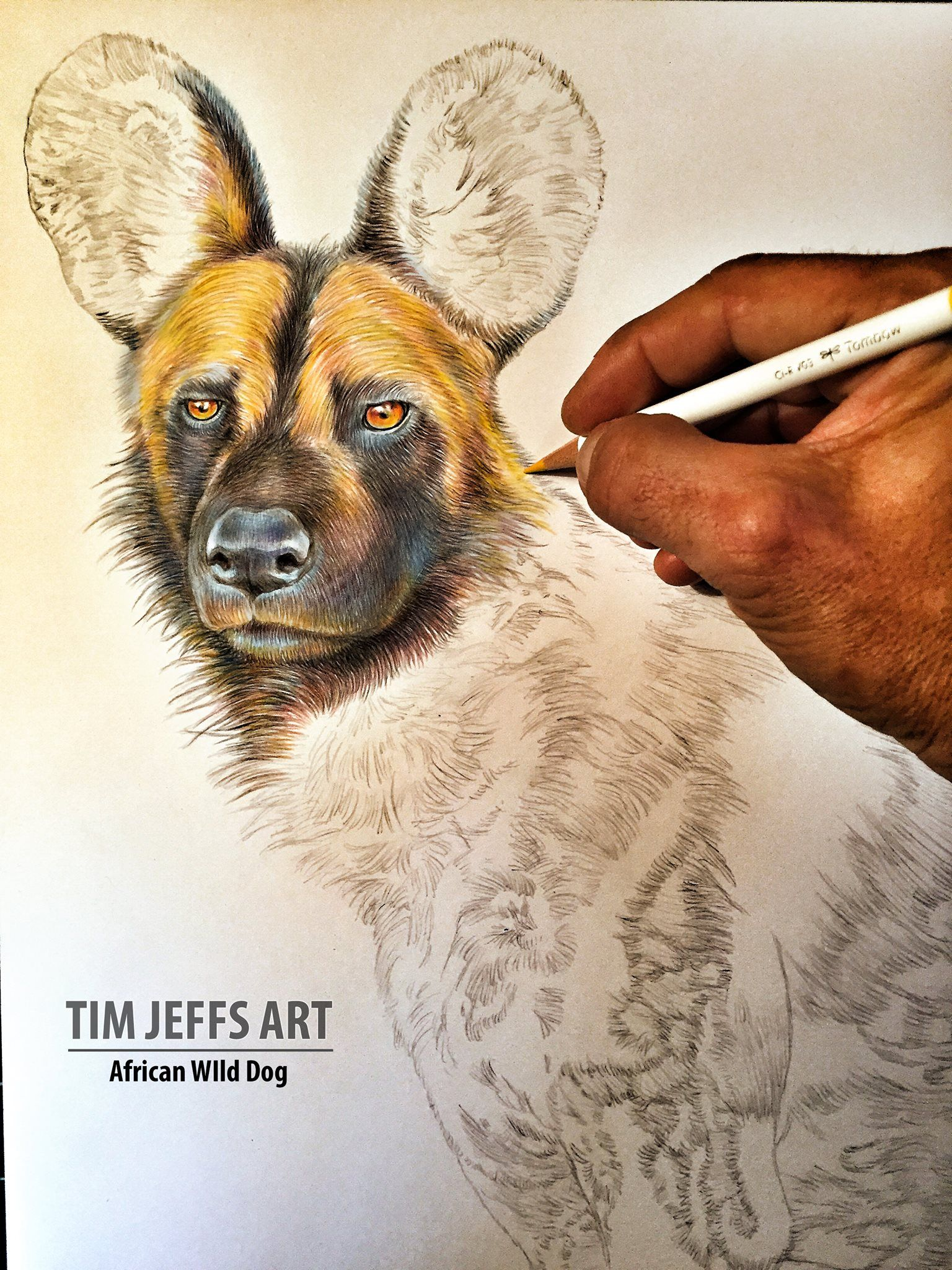 African wild dog wip 1 for my last drawing of 2018