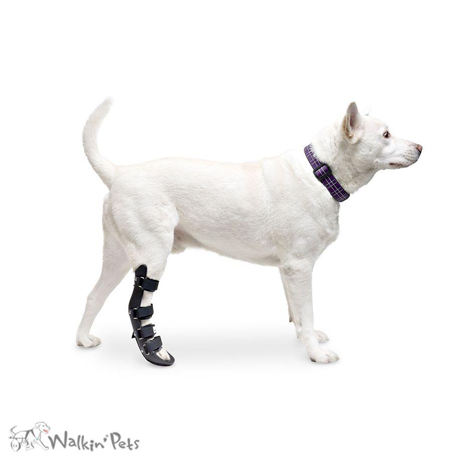 Rear Splint For Dogs Walkin Rear Splint Handicappedpets Dog